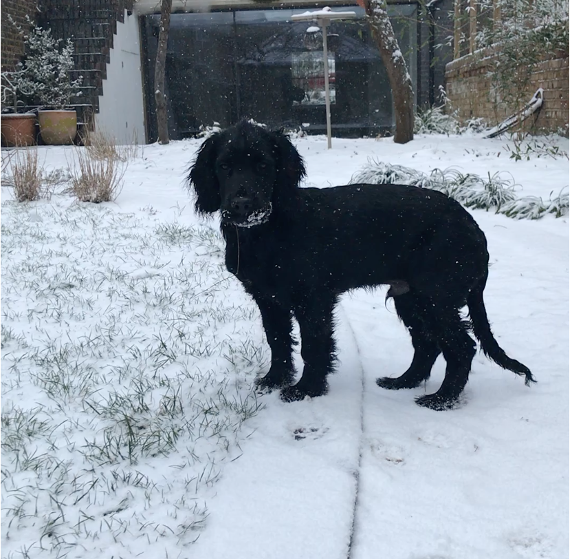 The puppy who LOVED snow...
