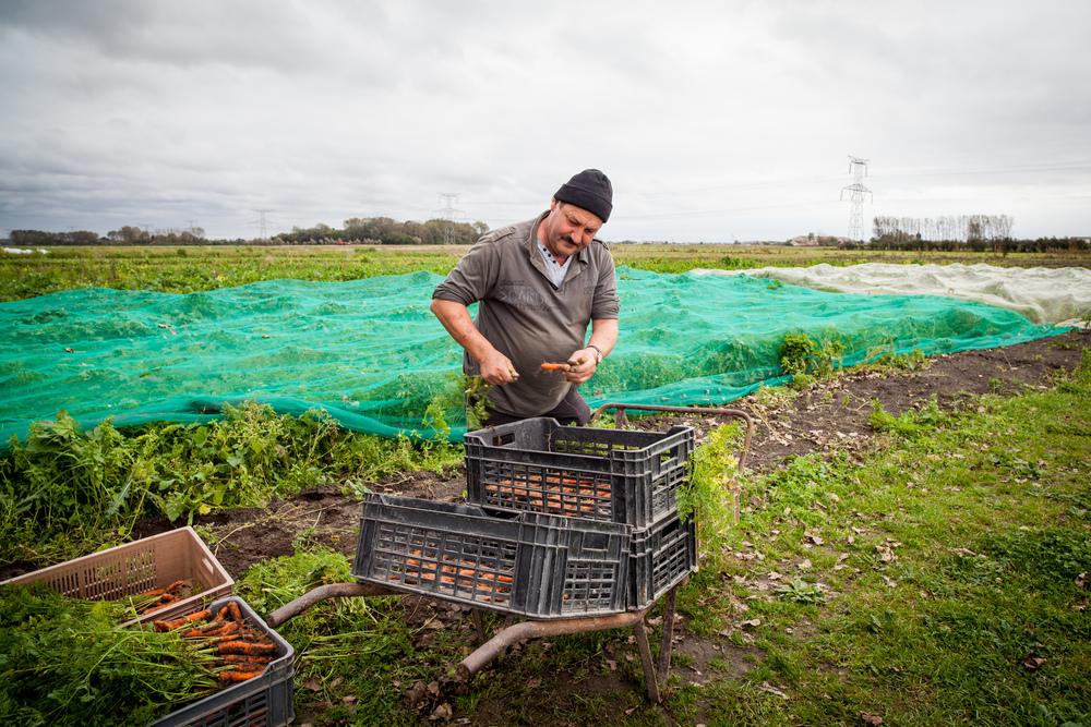 """L'écopôle alimentaire basée à Vieille-Eglise dans le Pas-de-Calais propose une agriculture biologique et solidaire. Les fruits et légumes sont produits par des personnes en réinsertion, et des """"paniers solidaires"""" sont distribués aux familles défavorisées."""