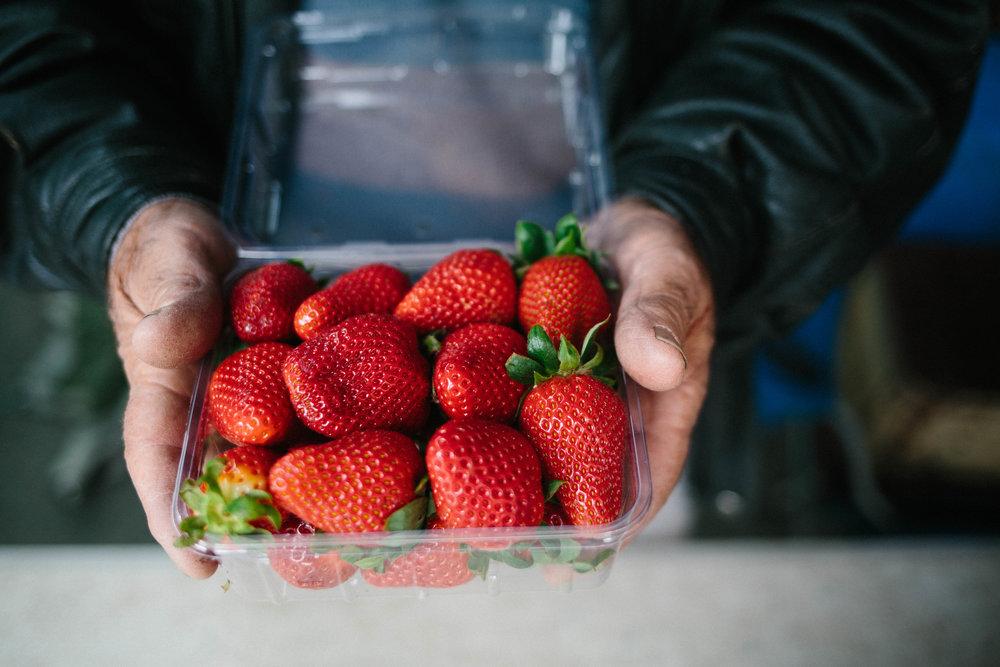 Fresh Strawberries Farmers Market