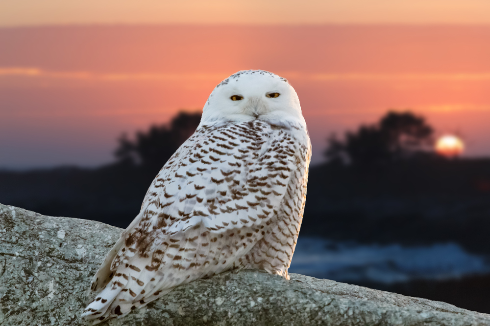 The exposure was balanced in this image by taking one exposure for the owl and one for the sky, then blending them in Photoshop.