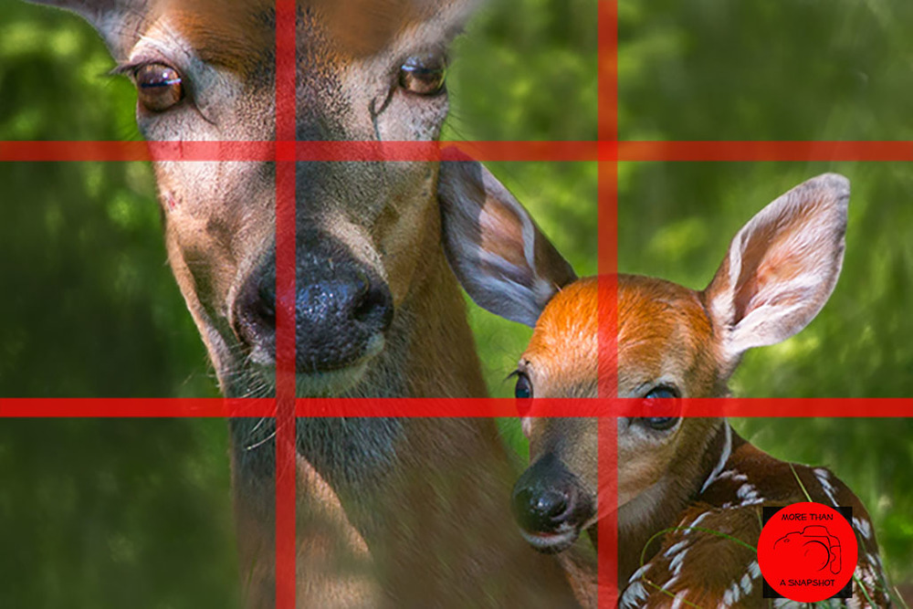 The tic-tac-toe type grid can help you to figure out where to place your subjects.  Image by Gary Detonnancourt