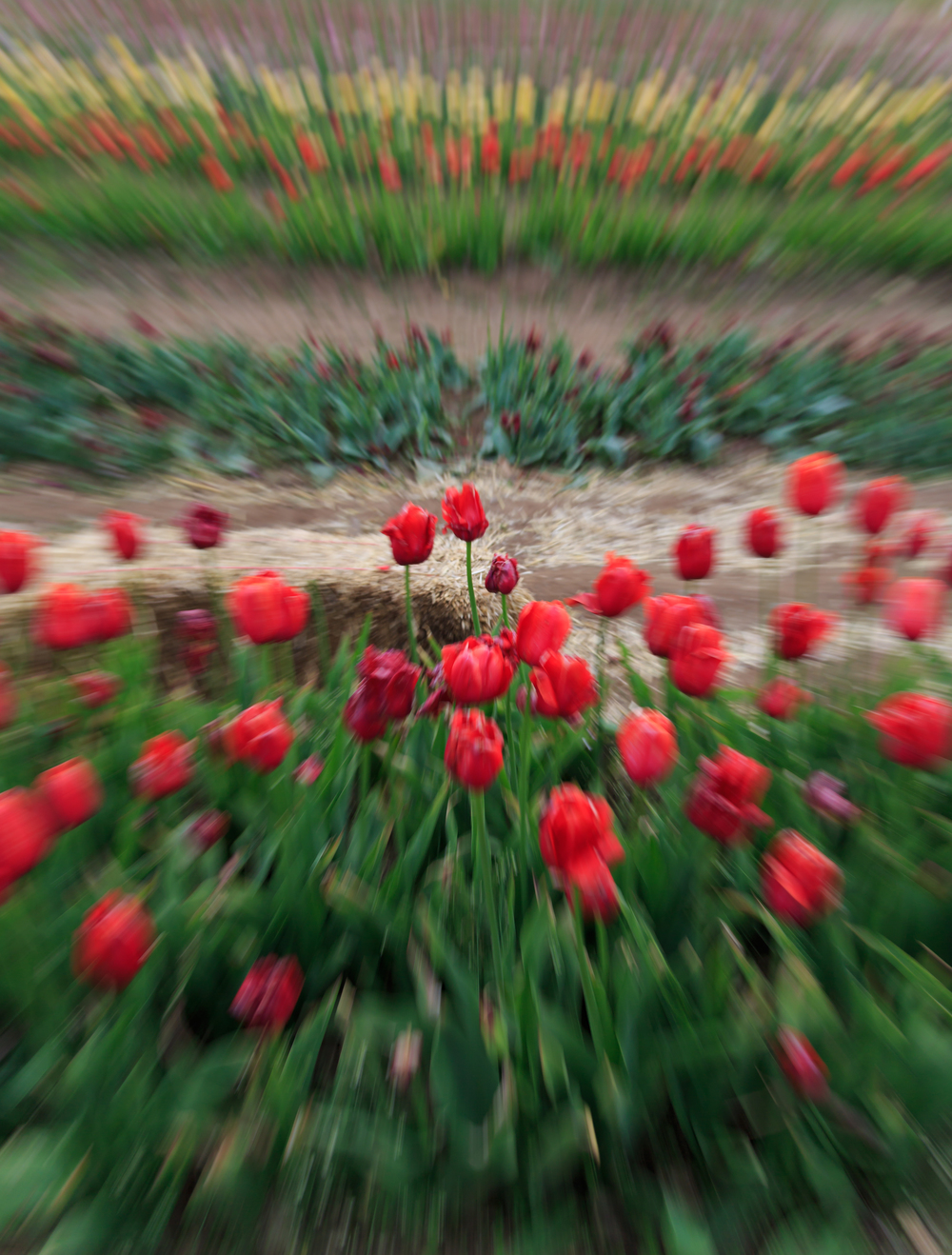 This was another zoom technique, this time I do have some flowers in focus and I love how it make the image feel sort of 3D.