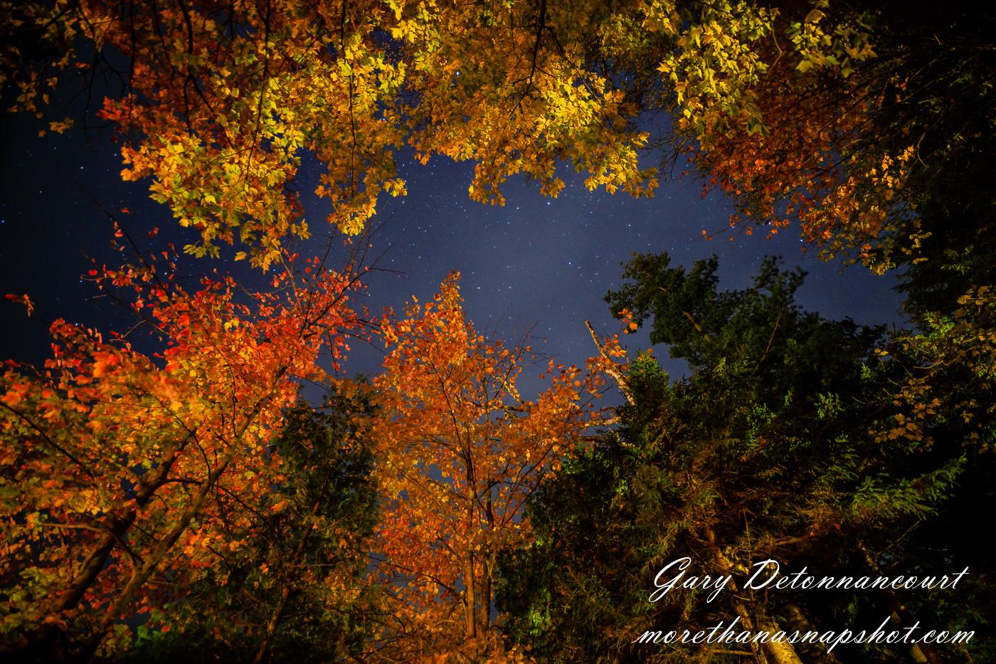 fall foliage and the night sky u2014 more than a snapshot