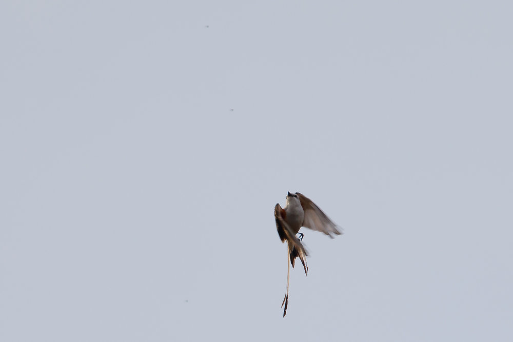 Trustom bird 2018-1671.jpg