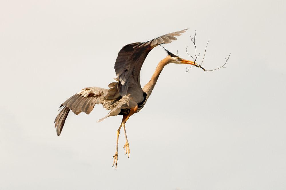 Heron Rookery-1885-Edit.jpg