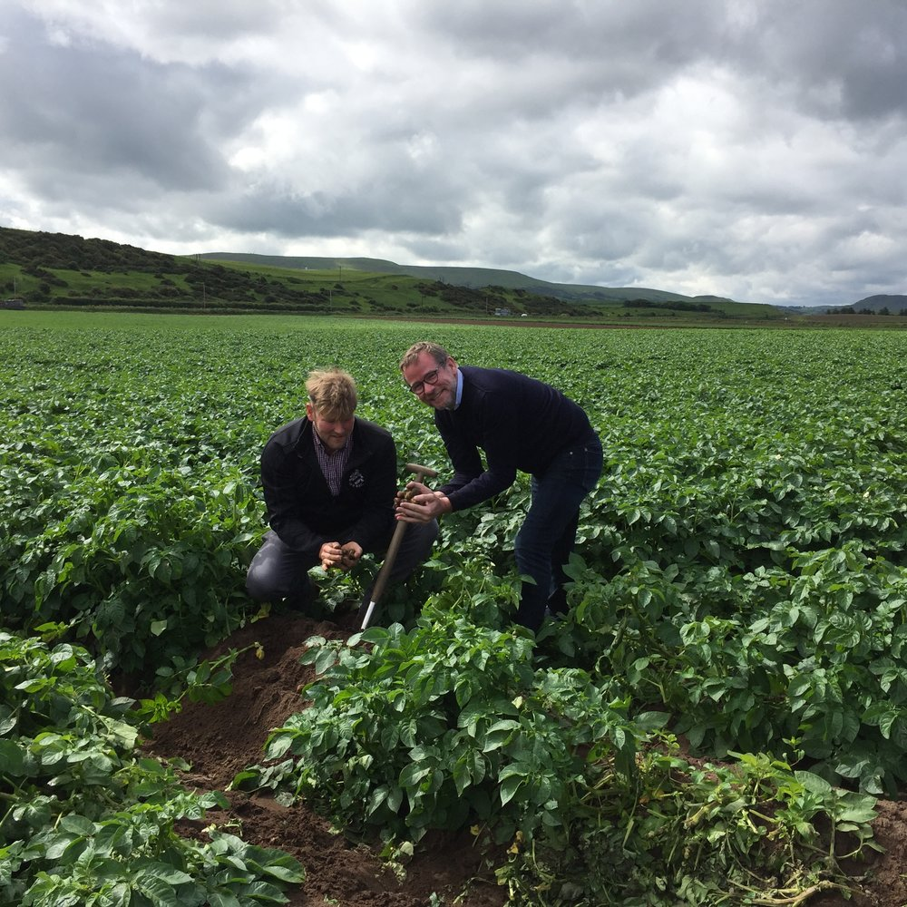 Chef Andrew Fairlie (right) digs for victory ... the very first Ayrshire Earlies of the season grown by Girvan Early Growers.