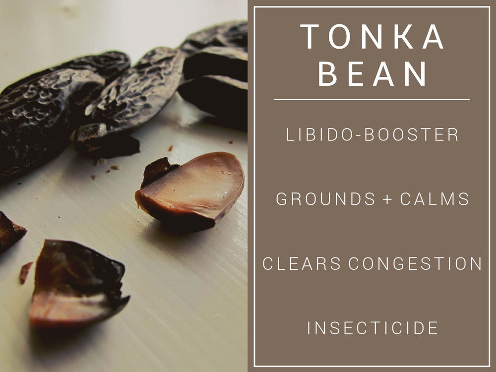 tonka bean Essential Oil