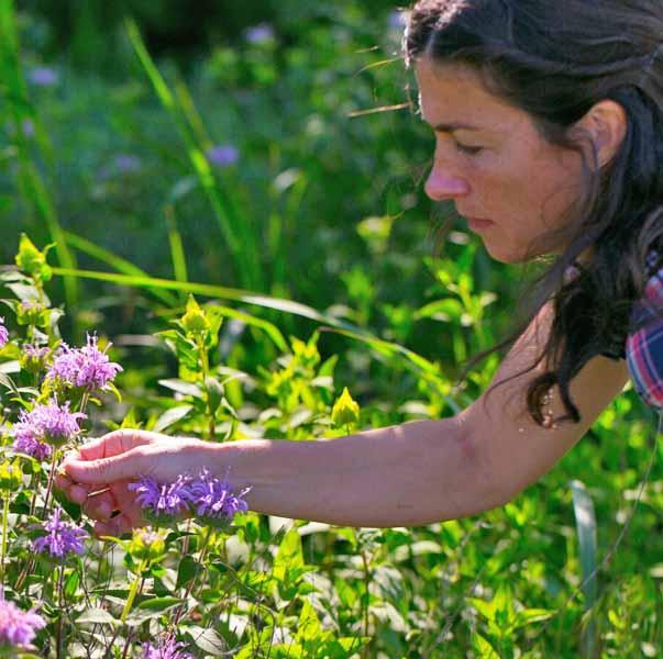 PLANT SPIRIT COMMUNICATION