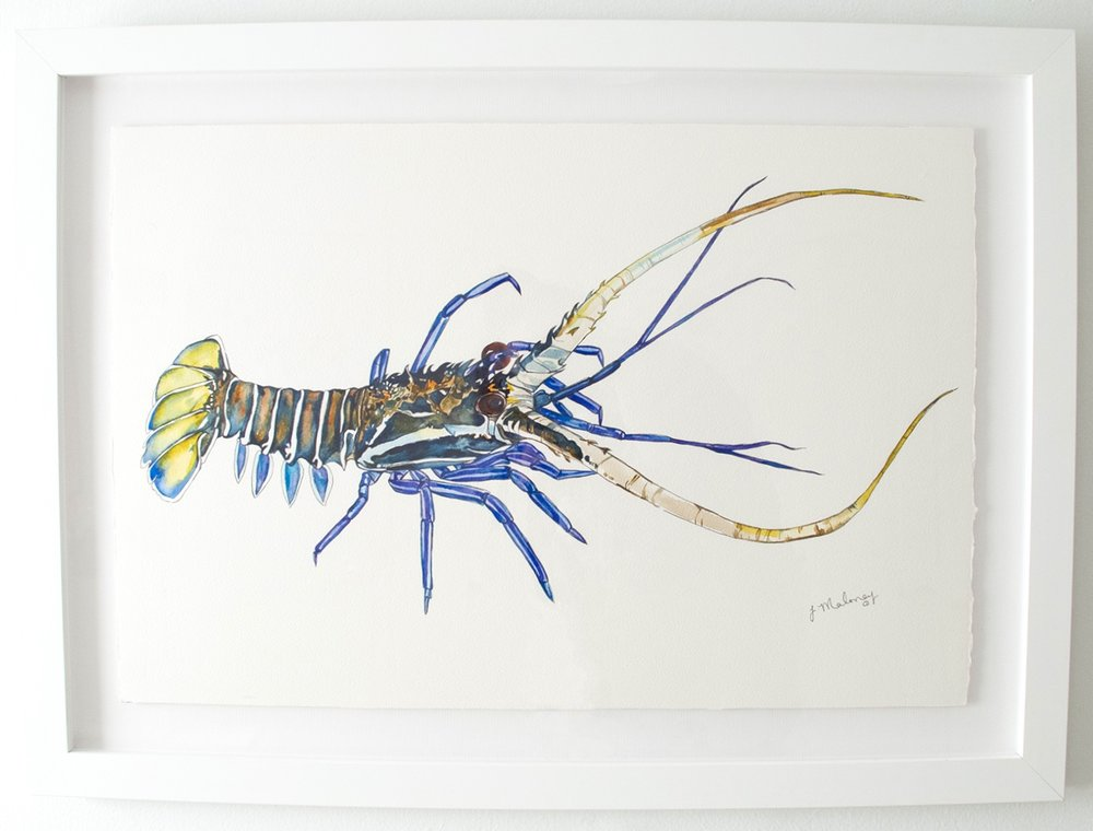 Rock Lobster, Watercolor & Ink