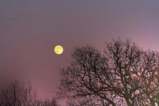 Moon11-10-11.jpg