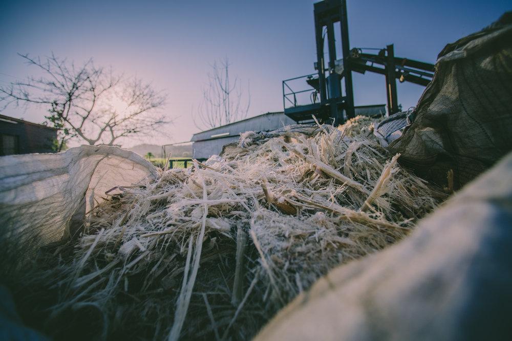 shredded sugarcane.jpg
