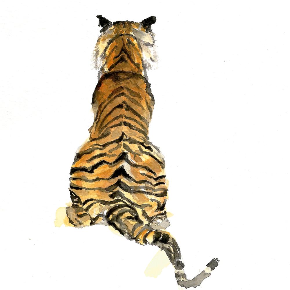 Tiger 7.5.png