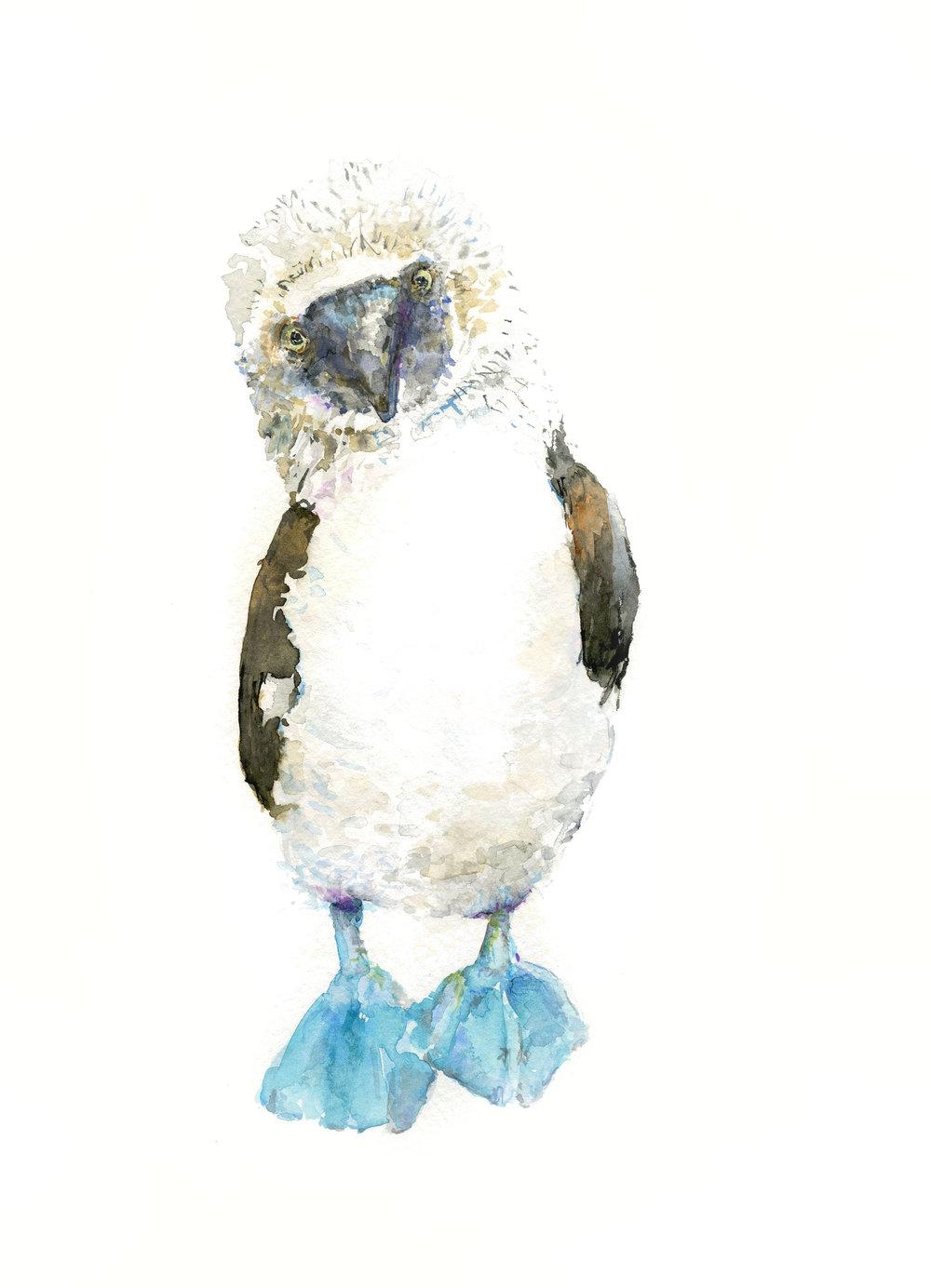 BluebirdEdit.jpg