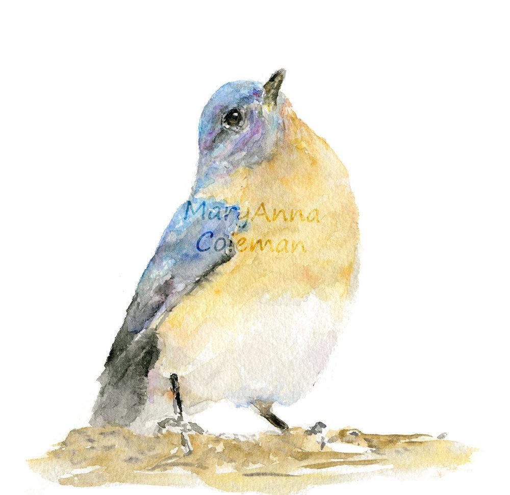 BirdLookingUpWhite.jpg