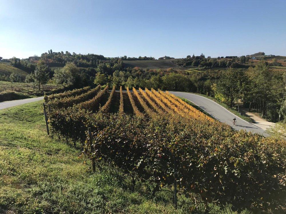 fietsen wijngaarden