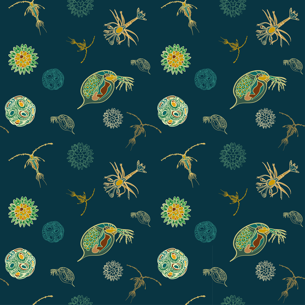 plankton pattern-02.png