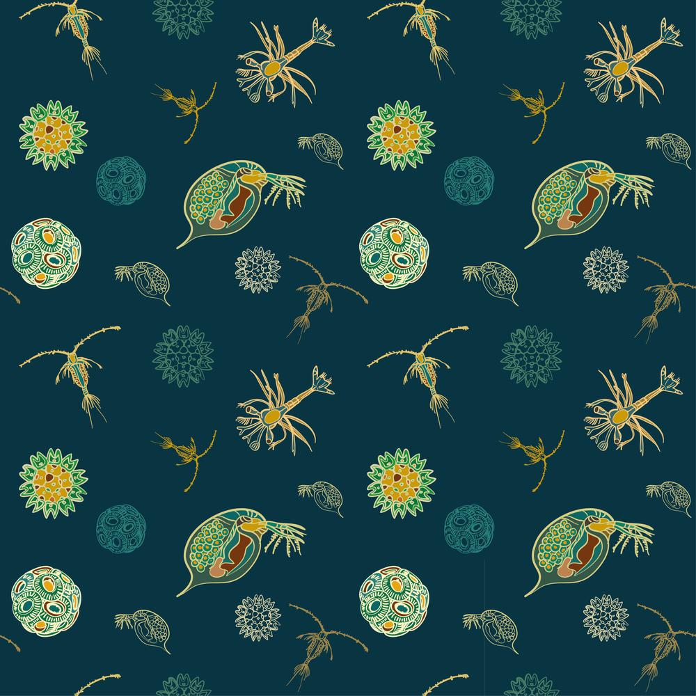 plankton pattern-02.png