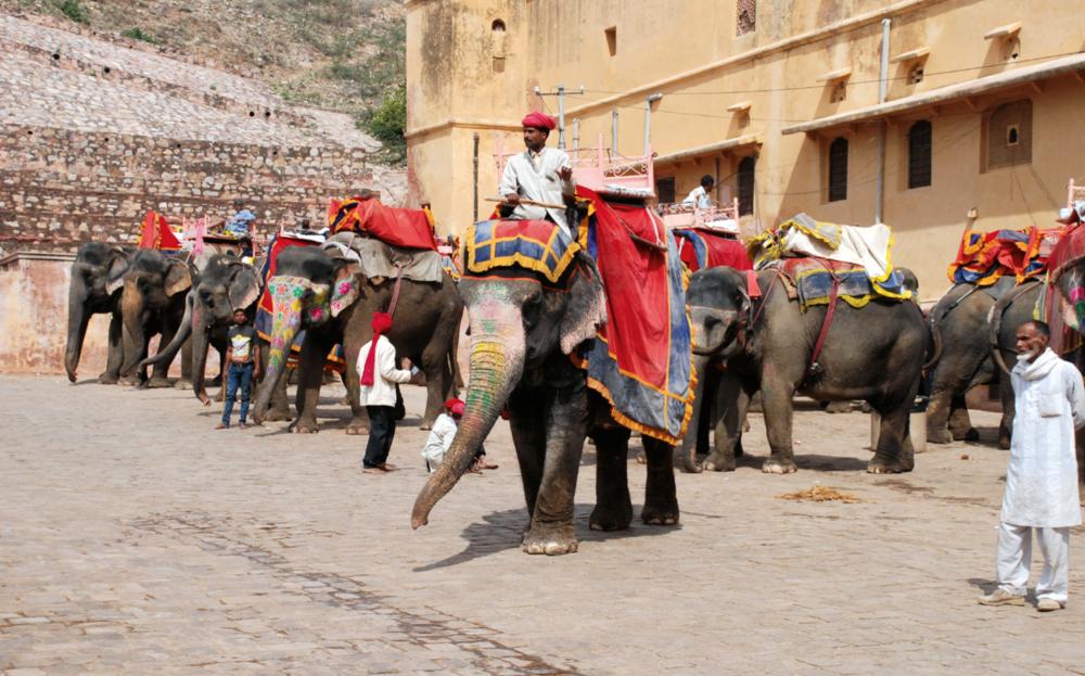Jaipur.   © Frank Raj.