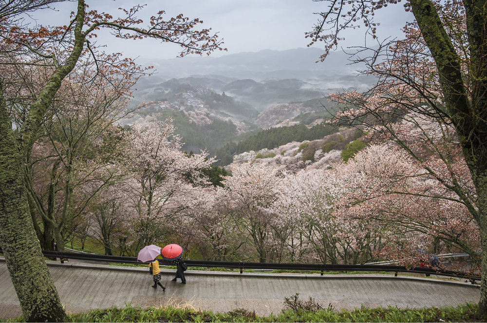 """Nara , la cuna del arte, la literatura y la cultura japonesa; y su parque, más conocido como """"El Parque de los Ciervos"""""""