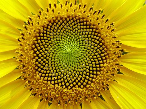 fractal flower.jpg