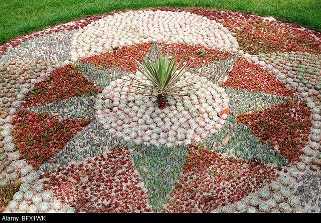 display-of-succulent-drought-tolerant-plants-in-a-geometric-design-BFX1WK.jpg