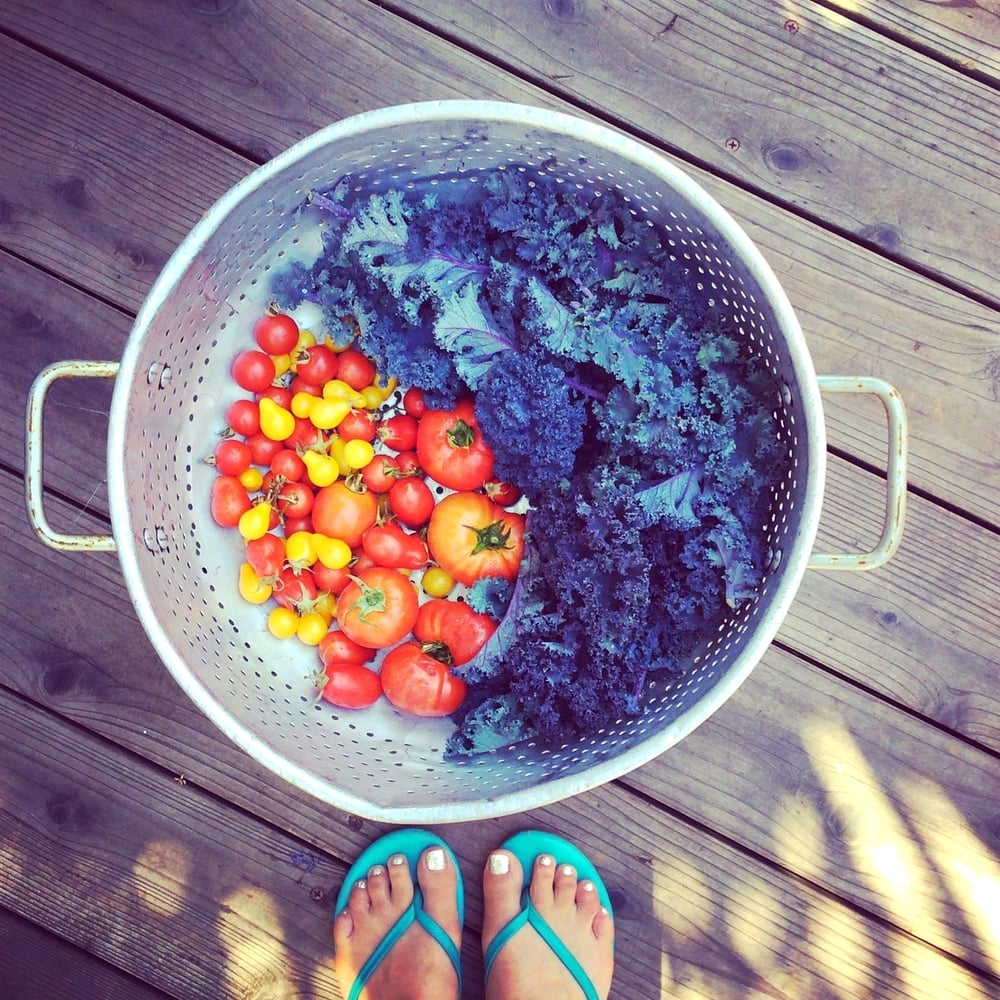 Endless tomatoes and greens of every color filled the colander in 2015.