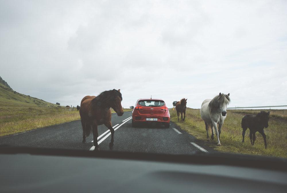 Iceland-7860.jpg