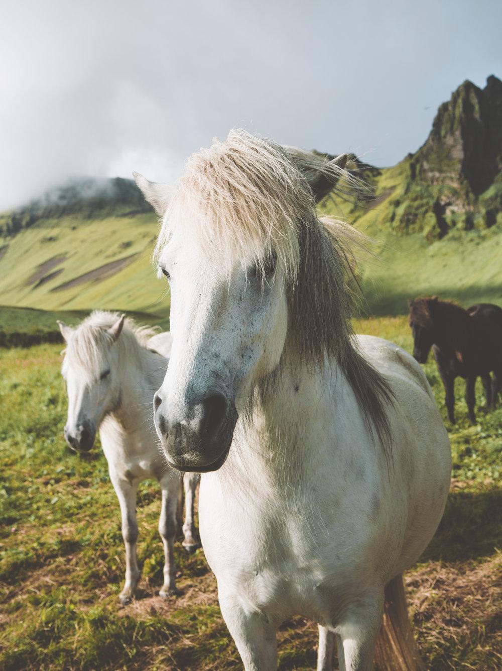 Iceland-8512.jpg
