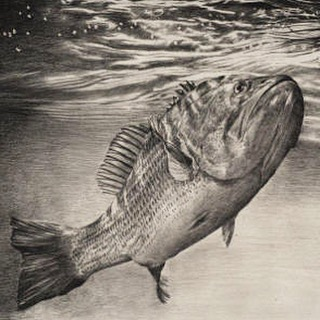 "A snippet of the detailed ""You're Mine""--Available for purchase through the link in profile. #fish #fishing #underwater #water #lake #river #nature #wildlife #outdoors #fishermen #fisherman"