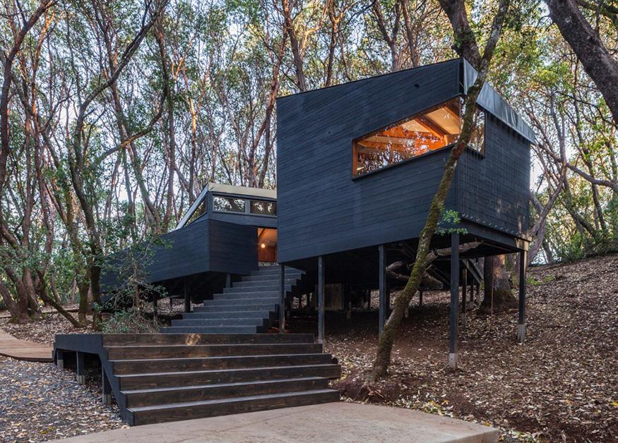 foresthouse3.jpg