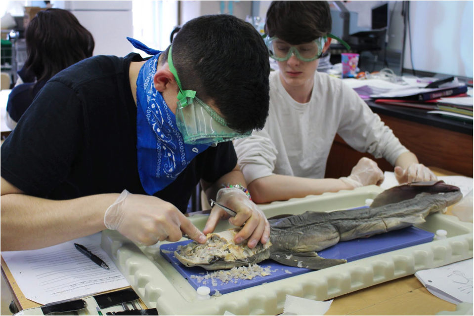 Students used  included scapulas, forceps, and surgical scissors in the Anatomy class to dissect dogfish sharks.