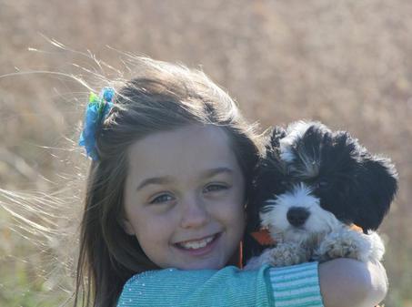 little girl with Cavachon puppy