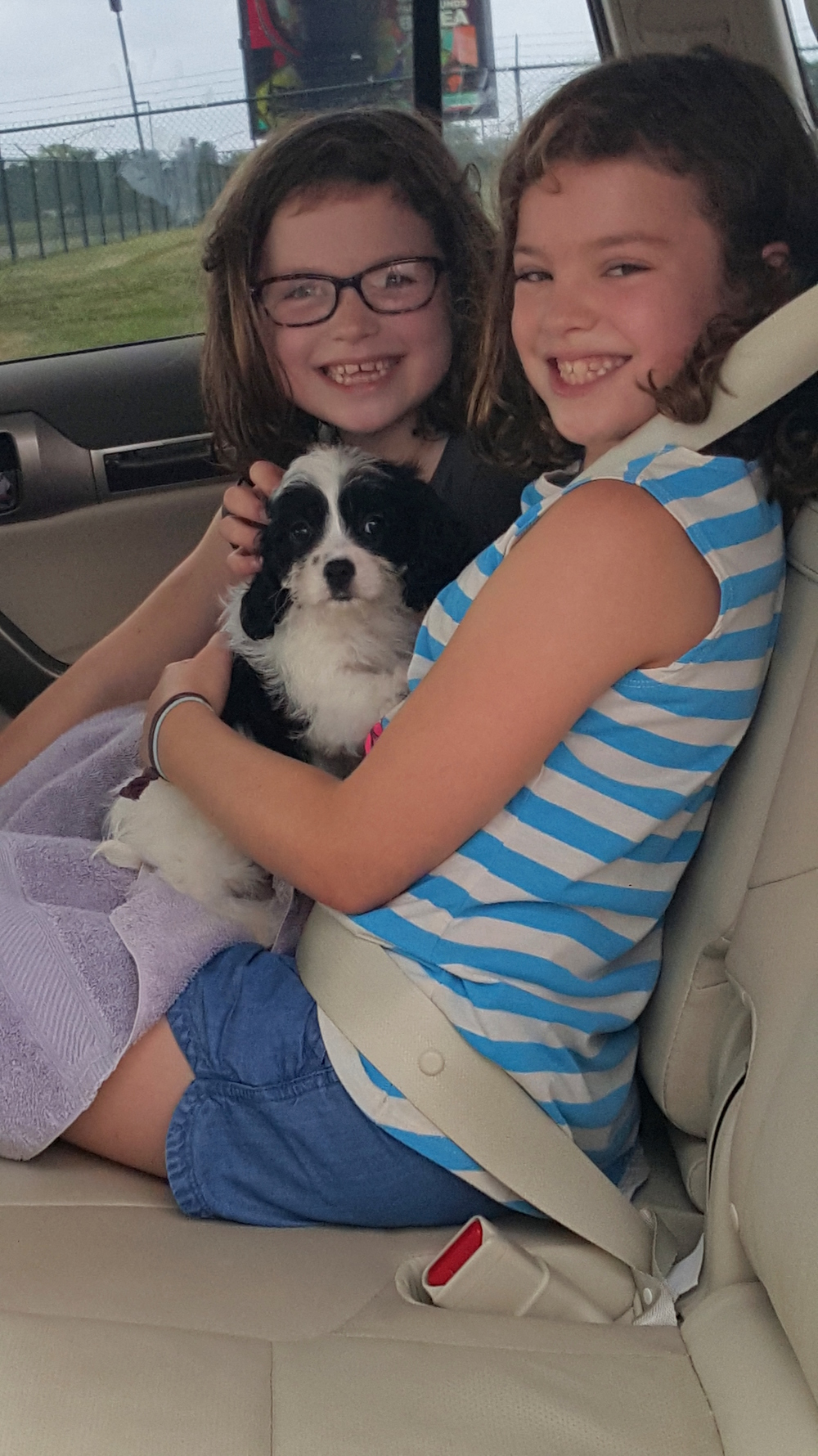 Little girls with Cavachon puppy