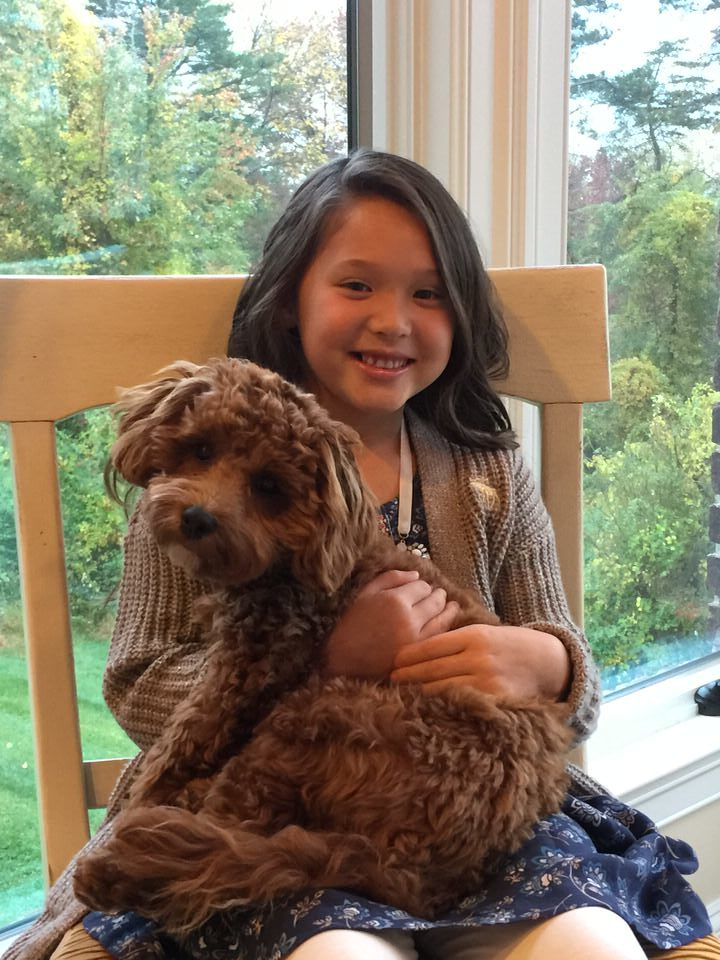 Cavapoo with little girl