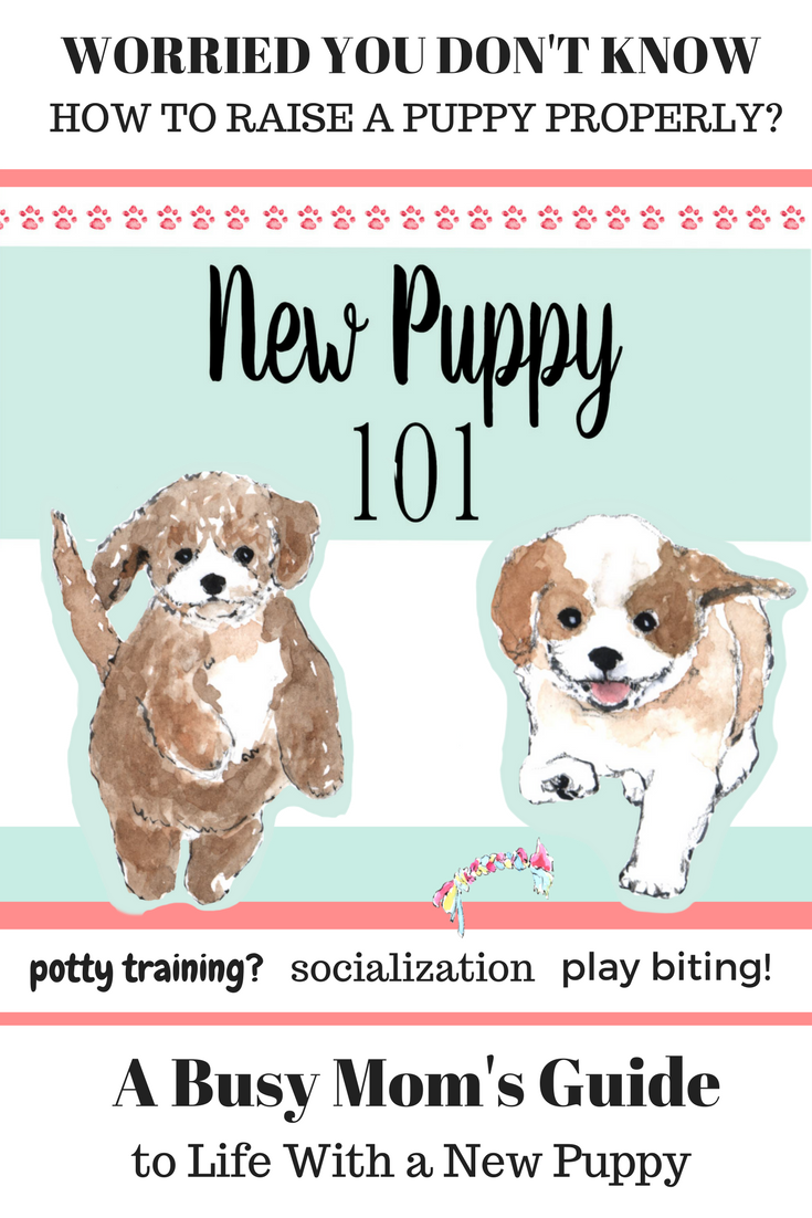 new puppy training