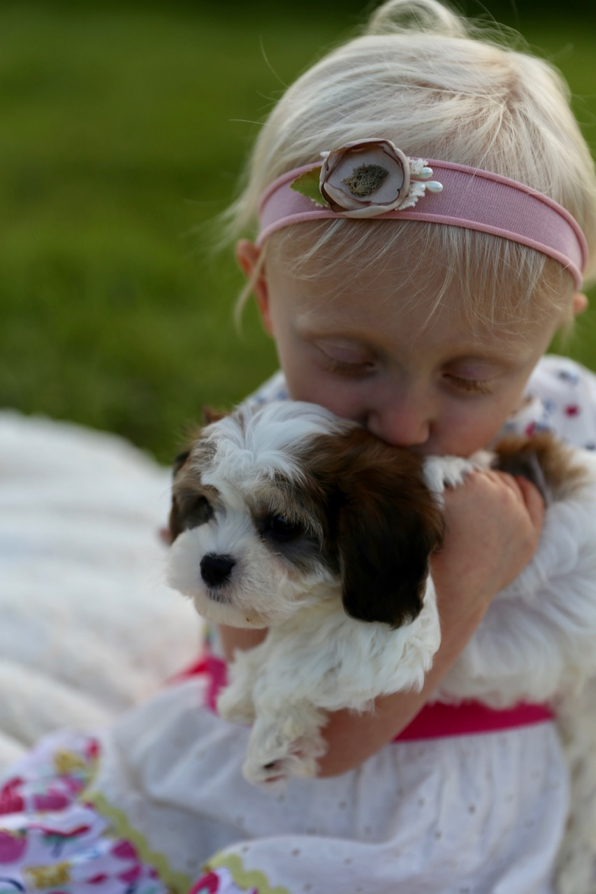 Foxglove Farm Cavachons with Clara Rose