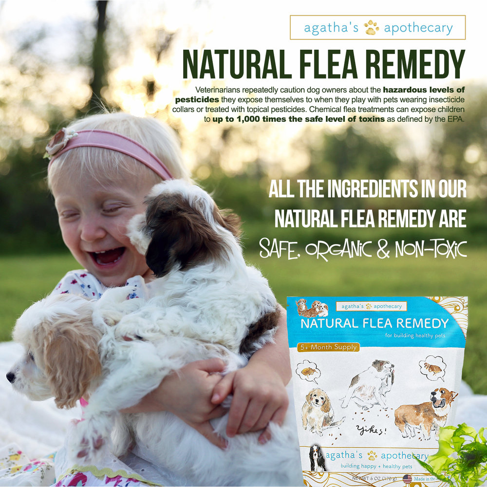 Natural Flea Remedy