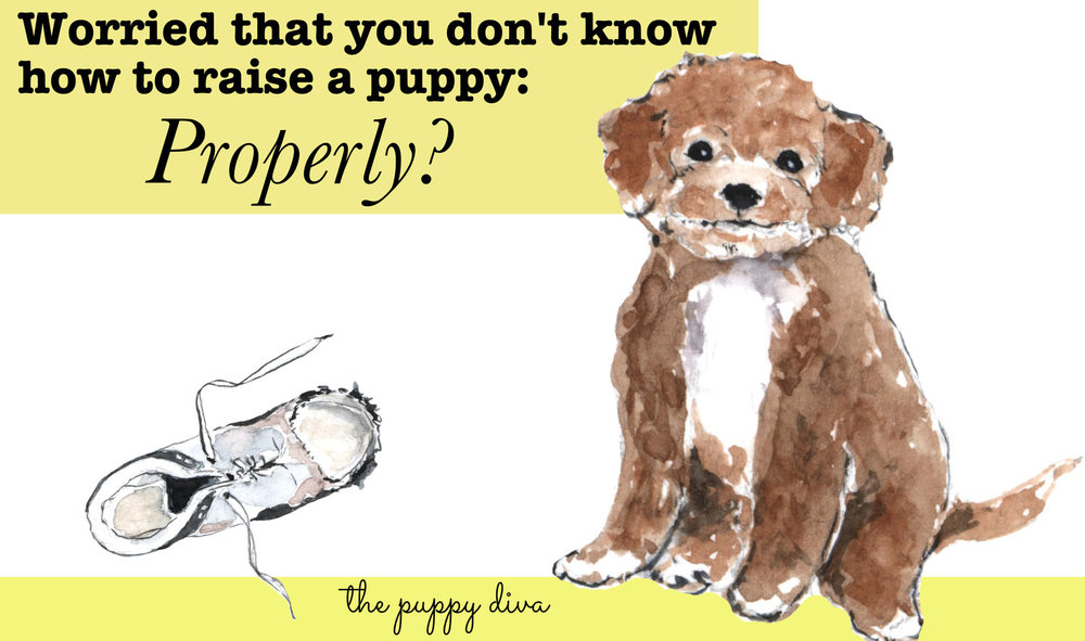 My goal is to help every new puppy owner have the best possible life with their new puppy.  Foxglove puppies have puppy basic training started and every puppy comes with our eCourse Little Puppy Training 101 to help you navigate step-by-step through raising a puppy that is a joy to own.
