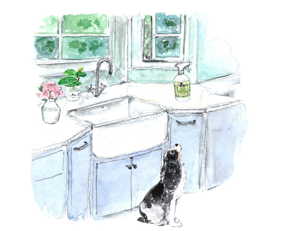 Agatha's Apothecary Peppermint Cleaner in cute farmhouse kitchen