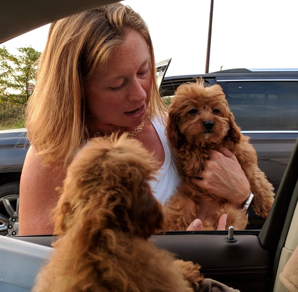Cavapoo puppy Tabasco and her new owner