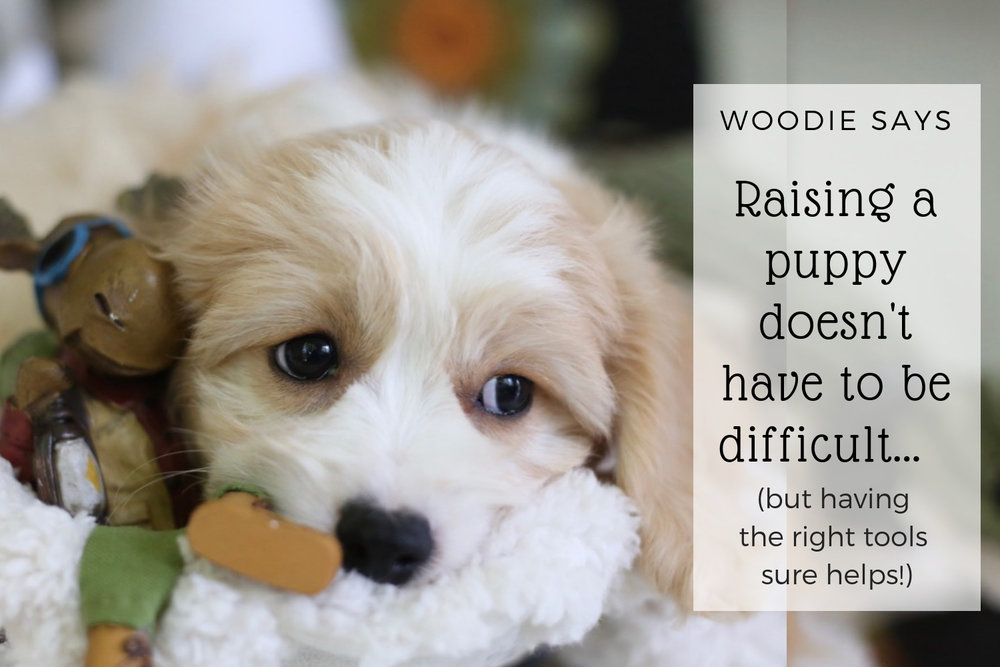 How to train a puppy? That question has 350,000,000 million results on Google, no wonder puppy owners are confused…