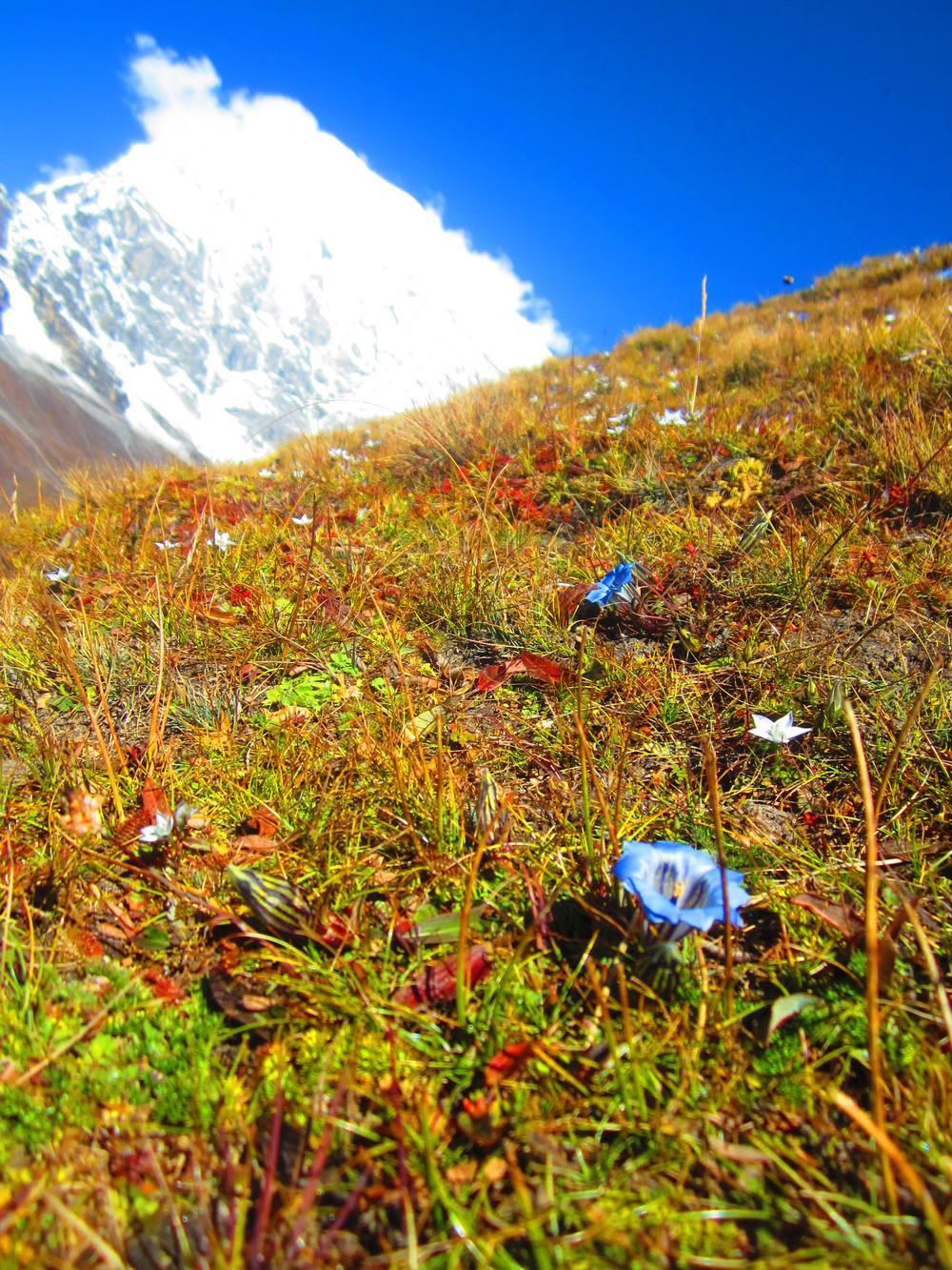 Langtang Lirung from Kyanjin Ri, Nepal