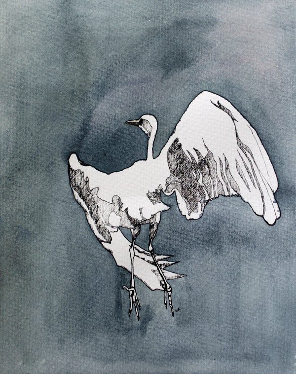 Egret in Flight    12 x 9    ink & watercolour on paper