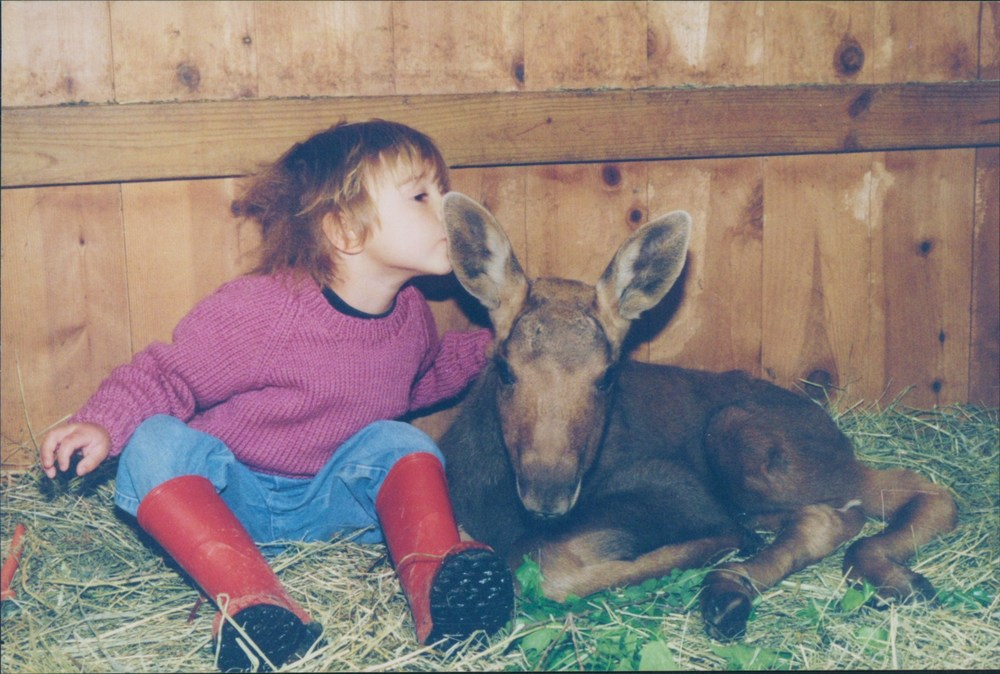 This was our first baby moose, Clifford! He found a great home in a north american wildlife park in MINNESOTA where he was essentially free to roam over a vast track of land.
