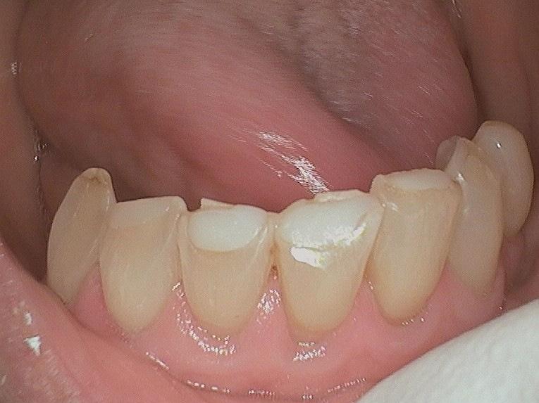 Fiddlehead Dental Fiddlehead Dental