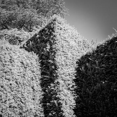 Geometric Hedge  © Graham Dew 2012