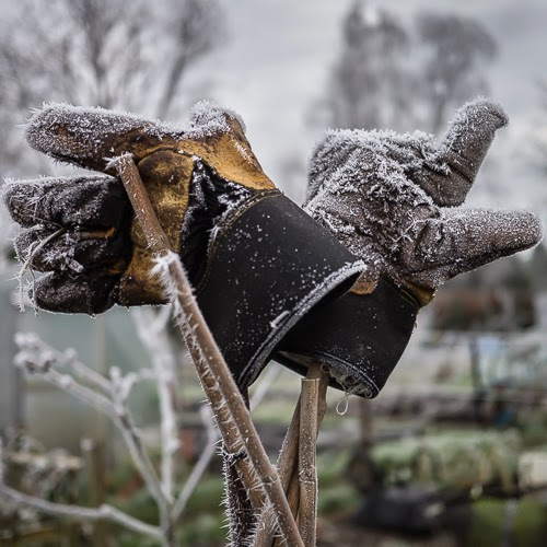 Frost on the Allotment #2 © Graham Dew 2014
