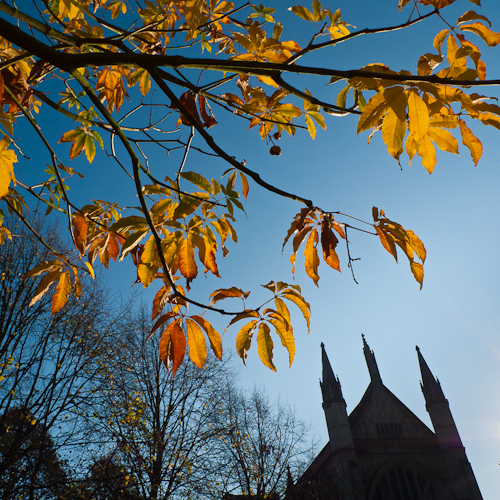 Autumn Leaves, Winchester Cathedral Yard, 2011 © Graham Dew