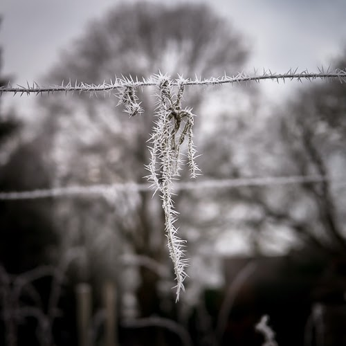 Frost on the Allotment #3 © Graham Dew 2014