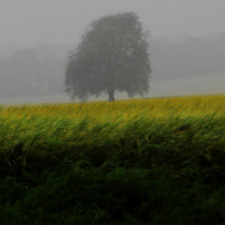 Summer Low – Rain Tree © Graham Dew 2007